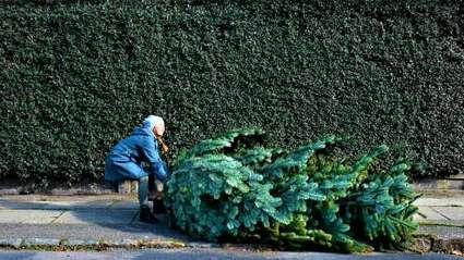 Funny story: A 96-Year-Old Woman Is Caught Trying To Steal a 19-Foot Christmas Tree From Walmart